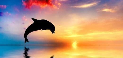 интересное о дельфинах.