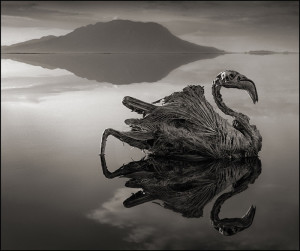 Фотограф Ник Брандт