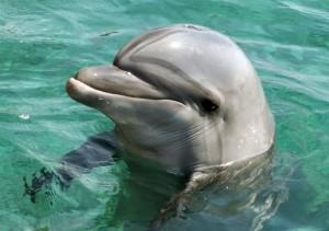 дельфин2