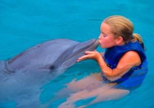 дельфин3