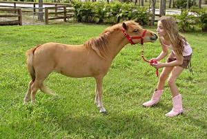 Американская миниатюрная лошадка